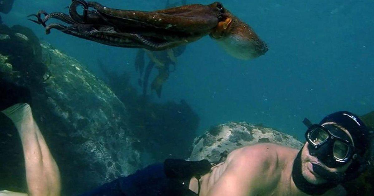 Cena do filme Professor Polvo. Nela, vemos Craig Foster nadando junto do polvo. Ele é branco, está sem camisa e usa uma máscara de mergulho com um tubo preso à boca, e olha para cima, onde o polvo nada, esticando seu corpo gelatinoso.