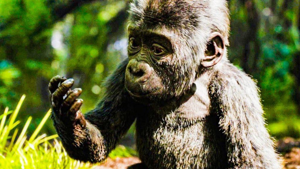 Foto retangular de uma cena do filme O Grande Ivan. Ao centro, tem um filhote de gorila de costas prateadas. Ele é preto, pequeno e peludo. Seu focinho tem o formato de um coração. Ele está levemente de perfil, olhando para sua mão direita com lama. O fundo está borrado, mas trata-se de uma selva.